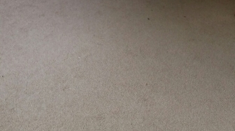 Brockley cleaning carpets