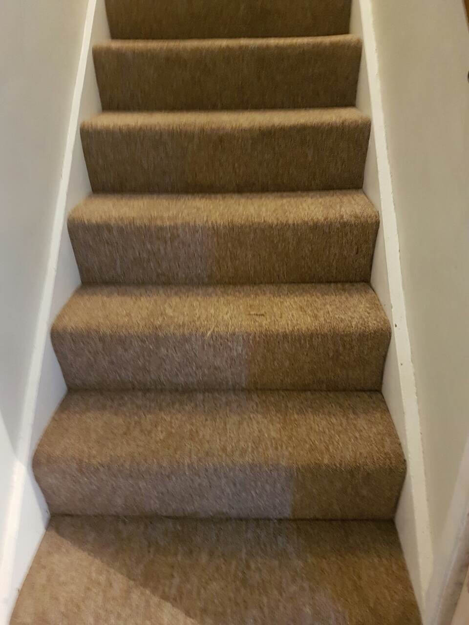 Barking cleaning carpets