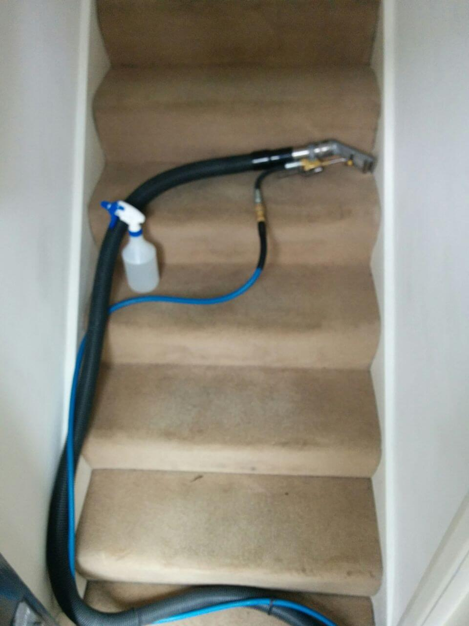 Clapton cleaning carpets