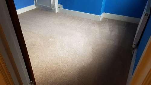 W8 carpet cleaning Kensington